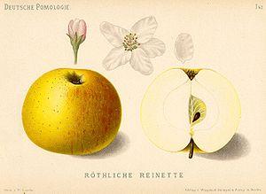 Reine_des_reinettes