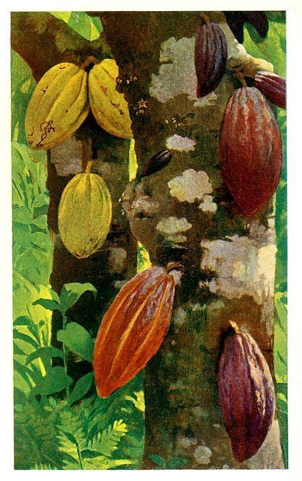 cabosse_cacao_chocolat