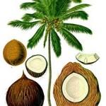Coco-pour_tarte_au_coco