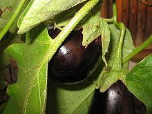 aubergine_salade_orientale